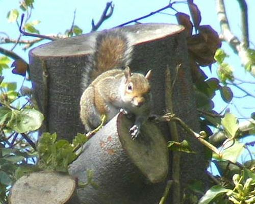 A squirrel snapped by Paula in Adel