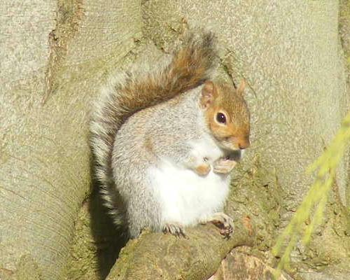 A squirrel that liked dozing off snapped by Paula in Adel