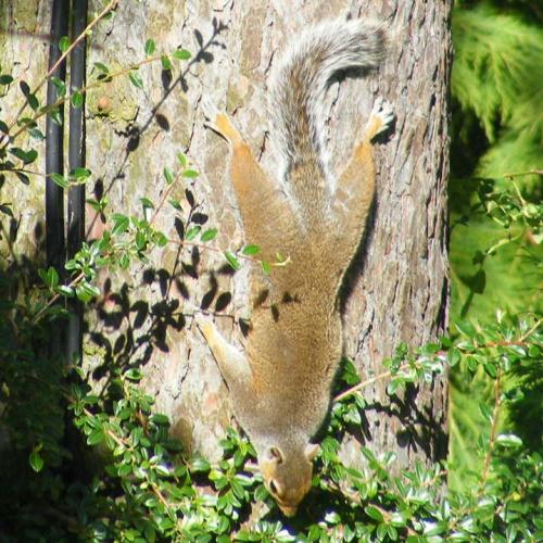 A squirrel sunbathing upside down snapped by Paula in Adel